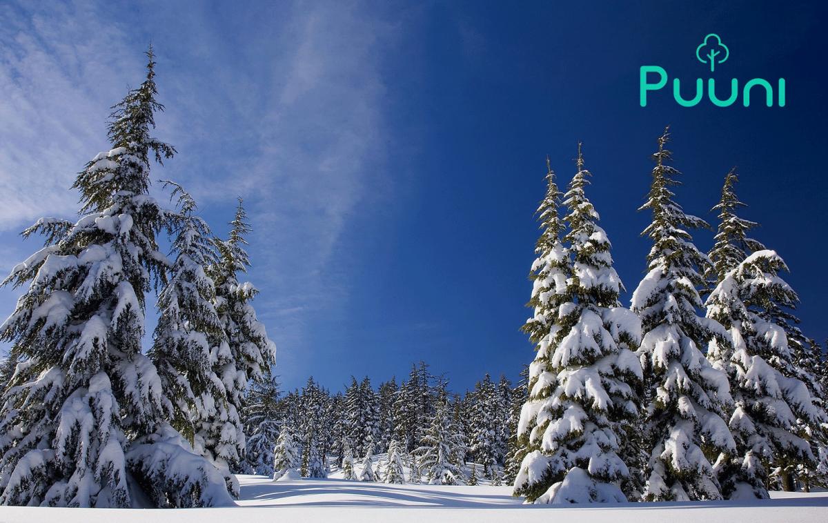 Leanheat – Kohdistimme joulumuistamisiin tarkoitetut varat Puunin toteuttaman hiilinielun hankintaan
